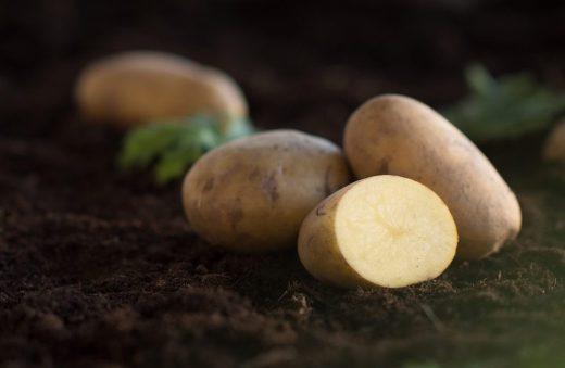 sa-lyckas-du-med-potatis-zetas-tradgard-1034x675
