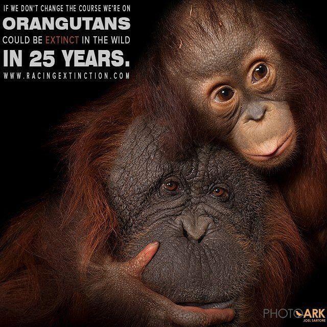 08d097853f2ddd33f35f37a9052d94b6--save-animals-extinct-animals